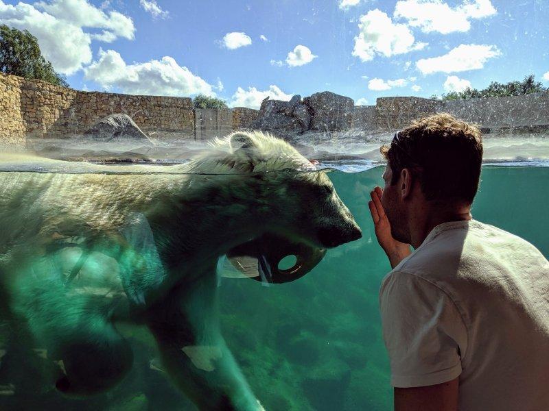愛沙尼亞露天博物館|塔林動物園拜訪北極熊 17