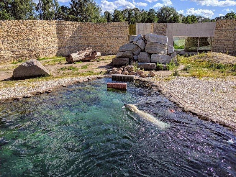 愛沙尼亞露天博物館|塔林動物園拜訪北極熊 16