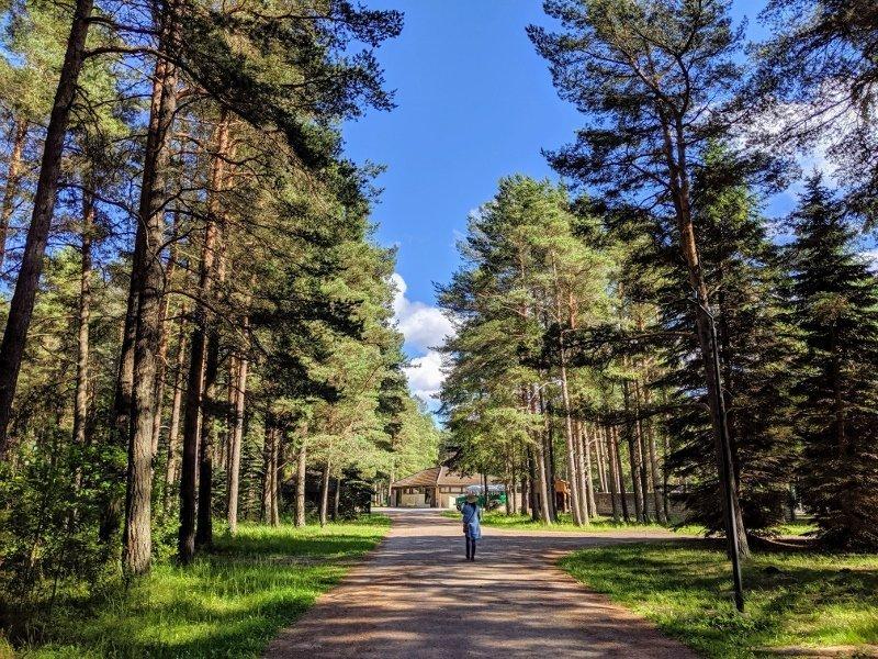 愛沙尼亞露天博物館|塔林動物園拜訪北極熊 13