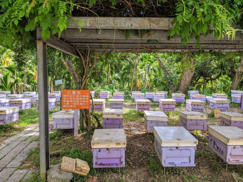嘉義梅山蜂之谷養蜂場|賞蜂嚐蜜.純正蜂蜜在這裡 6