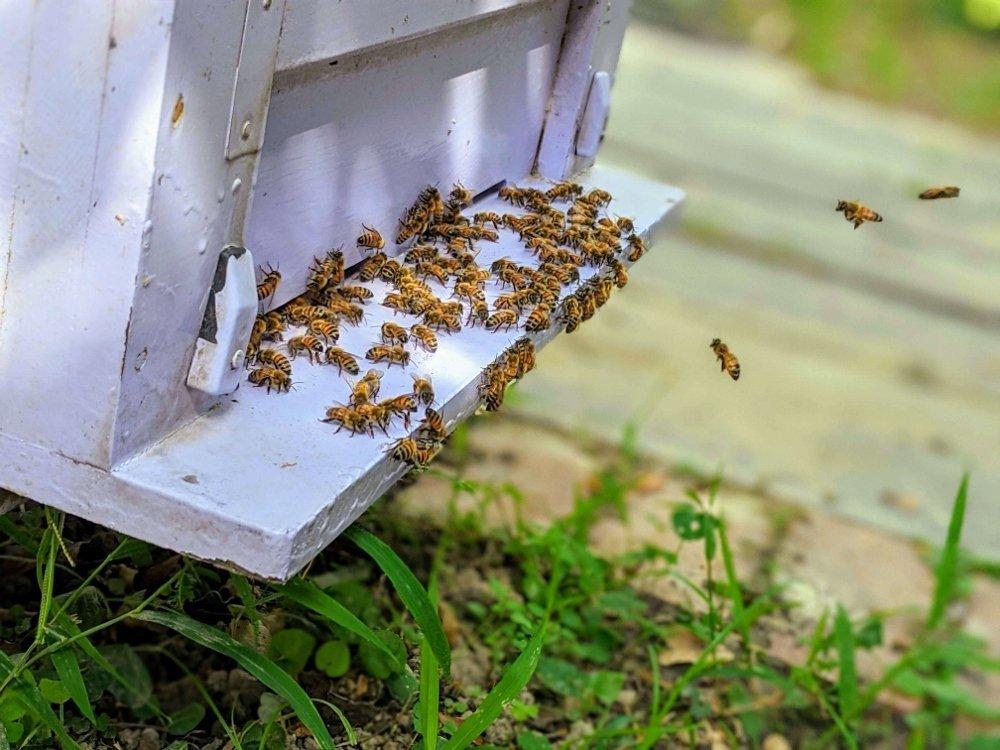 嘉義梅山蜂之谷養蜂場|賞蜂嚐蜜.純正蜂蜜在這裡 8