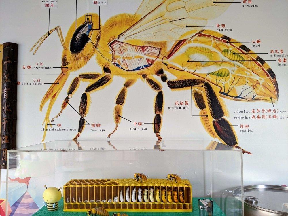 嘉義梅山蜂之谷養蜂場|賞蜂嚐蜜.純正蜂蜜在這裡 3