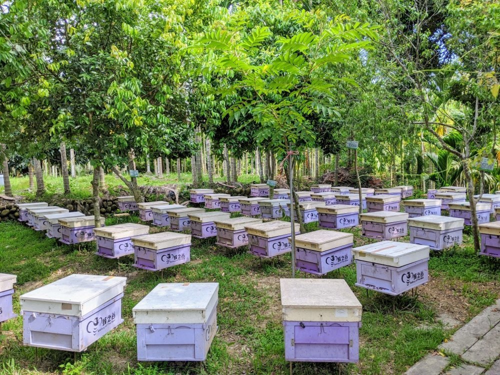嘉義梅山蜂之谷養蜂場|賞蜂嚐蜜.純正蜂蜜在這裡 7